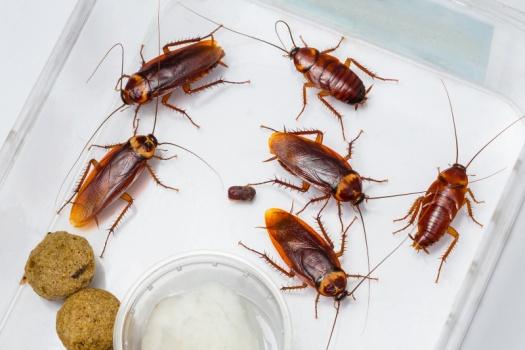 Опасность синантропных насекомых